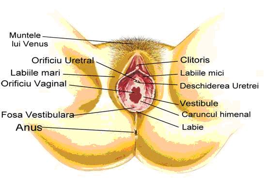Negii genitali: semnal de alarma sau nimic ingrijorator?